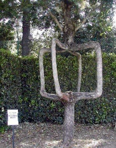 amazing_tree5