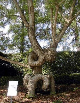 amazingtree1