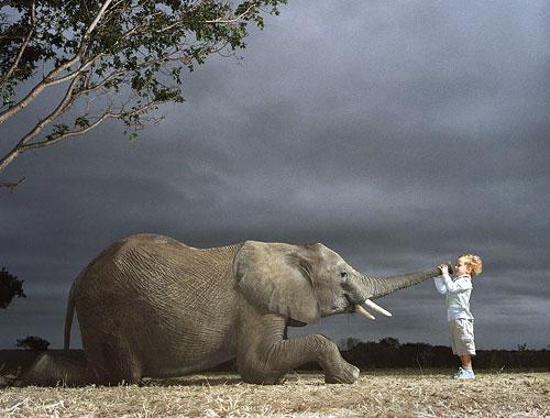 elephant-breeze