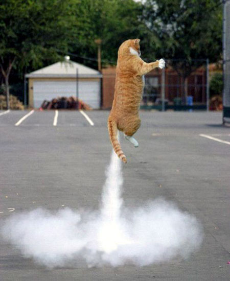 rocket-kitty